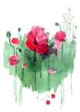 Watercolor hand drawn poppies on green background. Floral birthd. Ay card royalty free stock image