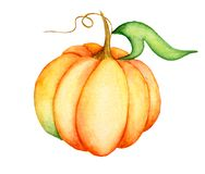Watercolor pumpkin illustration isolated on the white background Royalty Free Stock Photography