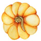 Watercolor pumpkin illustration isolated on the white background Stock Photography