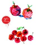Watercolor hand drawn red apple and chery royalty free stock photography