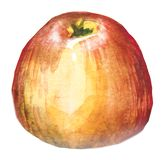 Watercolor hand drawn red apple. Isolated eco natural food fruit illustration on white background stock photo