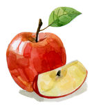 Watercolor hand drawn red apple Stock Photography