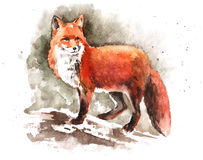 Watercolor hand-drawn red fox Royalty Free Stock Images