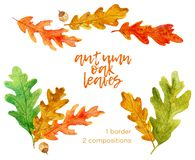 Set of hand drawn watercolor autumn oak leaves elements stock illustration
