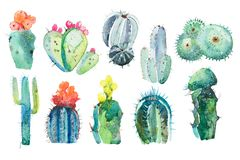 Watercolor hand drawn spiky cactus bloom flower. vector illustration