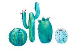 Watercolor hand drawn spiky cactus bloom flower. royalty free illustration