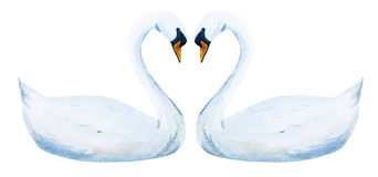 Watercolor hand drawn swans Royalty Free Stock Images