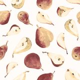 Watercolor hand drawn vintage pear fruits on white background. Watercolor vintage pear fruits painting on white background. Eco vegetarian food. Watercolor hand Stock Photography