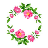 Watercolor hand drawn wild rosehip flower and leaves round wreath. Royalty Free Stock Photo