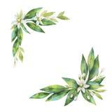 Watercolor hand drawn wreath fruit orange branch. Royalty Free Stock Photo