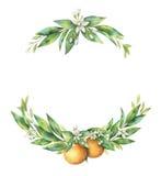 Watercolor hand drawn wreath fruit orange branch. Watercolor hand drawn wreath fruit orange branch isolated on white background. Illustration for design wedding stock illustration
