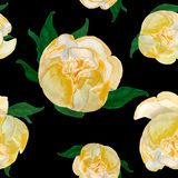 Watercolor yellow japanese peonies tile on black vector illustration