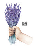 Watercolor hand with lavender bouquet Royalty Free Stock Images