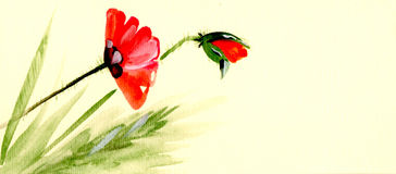 Watercolor hand made poppy. Watercolor hand made red poppy Royalty Free Stock Photo