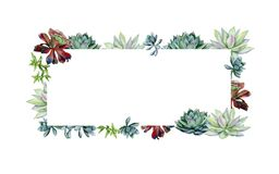 Watercolor hand painted banner with green succulents. Echeveria illustration, botanical painting of dudleya and zwartkop. Sempervivum art for invitation stock illustration