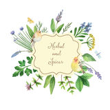 Watercolor hand painted banner with herbs and spices. Royalty Free Stock Photo