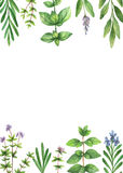 Watercolor hand painted banner. Royalty Free Stock Photography