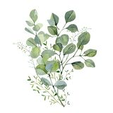 Watercolor hand painted bouquet silver dollar eucalyptus and green plants. Frolar branches and leaves isolated on white background