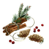 Watercolor hand painted Christmas illustration with cinnamon. Fir branches, fir cones and cranberry.nInvitation, greeting card. n stock illustration