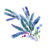 Watercolor hand painted fir-tree branches in blue colors Royalty Free Stock Photos