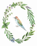 Watercolor hand painted frame with herbs, spices and bird. Royalty Free Stock Image