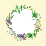 Watercolor hand painted frame with herbs and spices. Royalty Free Stock Image