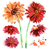 Watercolor hand painted gerberas on Stock Image