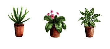 Watercolor hand painted house green plants. Decorative greenery collection perfect for print, poster, card making and scrapbooking royalty free illustration