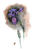 Watercolor hand painted illustration with alone iris on dark bac. Kground vector illustration