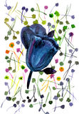 Watercolor hand painted illustration with black tulips on multic. Olor background royalty free illustration