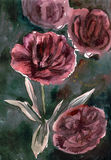 Watercolor hand painted illustration with darkly pink peonies on green backgroun. D. Card n vector illustration