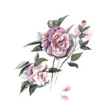 Watercolor hand painted illustration with piones isolated on white background in. Gentle tone. Floral birthday card stock illustration