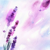 Watercolor hand painted lavender flowers. With watercolor splashes. Invitation. Wedding card. Birthday card.n Royalty Free Stock Photo