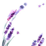 Watercolor hand painted lavender flowers Stock Photos