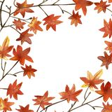 Watercolor hand painted nature autumn maple orange leaves on the brown branch for invitations and greeting cards with the space fo. R text stock illustration