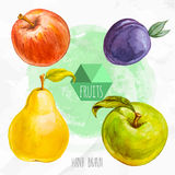 Watercolor hand painted red and green apple, pear and plum. Watercolor hand painted fruit set. Eco food illustration. Watercolor green background. Red and green Stock Photos