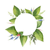 Watercolor hand painted round wreath with herbs and spices. Royalty Free Stock Image