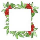 Watercolor hand painted squared border frame with rowan branches, little red berries and green leaves. Nature healthy vegan food illustration for invitations stock illustration
