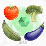Watercolor hand painted tomato, broccoli, zucchini and eggplant. Royalty Free Stock Image