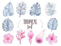 Watercolor hand painted tropical indigo leaf flower frangipani hibiscus calla lily set isolated on white background. Floral illustration. Botanical art Stock Photography