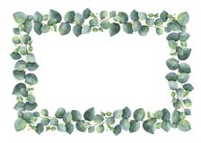 Watercolor hand painted vector rectangular frame with silver dollar eucalyptus. Royalty Free Stock Photography