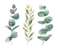 Watercolor hand painted vector set with eucalyptus leaves and branches. Floral illustration isolated on white background Royalty Free Stock Photos