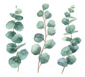 Watercolor hand painted vector set with eucalyptus leaves and branches. royalty free illustration