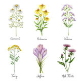 Watercolor hand painted vector set with medical herbs and plants. vector illustration