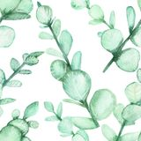 Watercolor hand painting of eucalyptus branches with green leaves. Seamless background, spring or summer flowers for invitation, wedding or greeting cards vector illustration