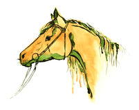 Watercolor hand painting orange horse head in bridle on white Stock Image