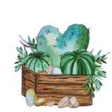 Watercolor handpainted cactus plant composition vector illustration