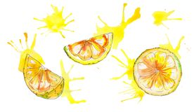 Watercolor handpainted juicy lemon isolated on white background royalty free illustration