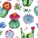 Watercolor handpainted seamless pattern of flowering cactus plant vector illustration