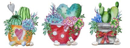 Watercolor handpainted set of cactus and succulent plant. Pot and pebbles.Watercolor clipart,individual flower isolated on white background.Perfect for Your vector illustration